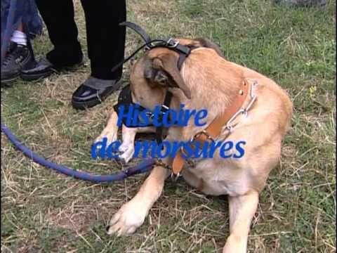 Comment être un bon maître pour son chien : Education du chiot au chien ...