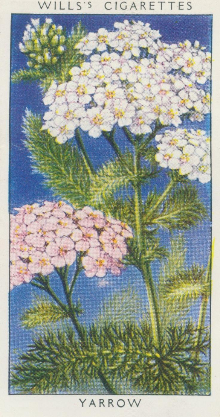 20 Best Velentines Ephemera Images On Pinterest Vintage Cards