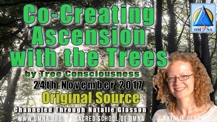 Channeling Co Creating Ascension with the Trees by Tree Consciousness Channeled Messages