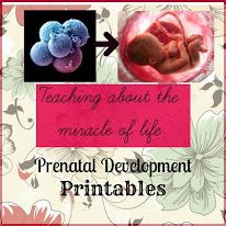 Prenatal Development Printables for kids