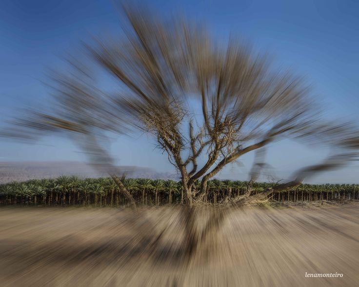Desert... - Negev, Israel, Middle East