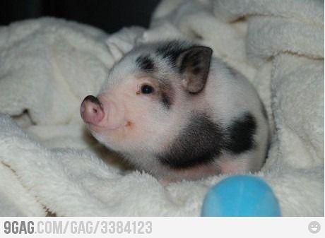 I'll name him Bacon <3 !