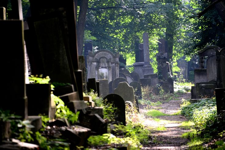 The Warsaw Jewish Cemetery is one of the largest Jewish cemeteries in Europe and in the world. Photo: Dennis Faro