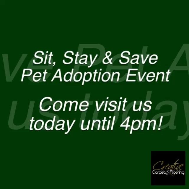 Come visit us today until 4pm for our Sit, Stay & Save Pet Adoption Event with P.A.W.S. Of Tinley Park! #pet #adoption #sitstayandsaveevent #stainmaster #dog #cat #puppy #kitten #pawstinleypark #phenix #stanton #tuftexcarpets #masland #dixiehome #carpet #