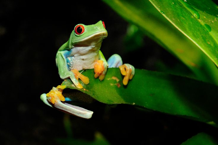 Frogs are amphibians known for their jumping abilities, croaking sounds, bulging eyes and slimy skin. They live all over the world and are among the most diverse animals in the world.