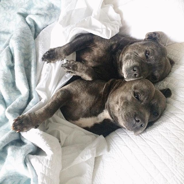 Muito amor! Cachorros inseparáveis dormem abraçados e de pijama; confira - Fotos - R7 R7 Meu Estilo