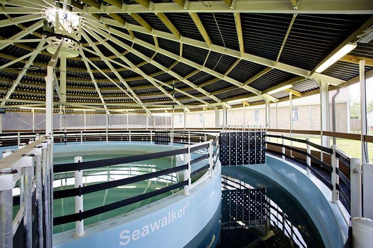 Inside a Seawalker salt water walker | Equine salt water ...