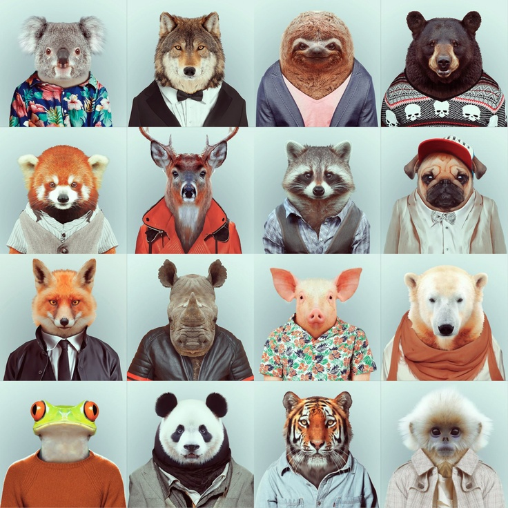 """Fashion Zoo Animals"" Photo Series by Yago Partal  Barcelona based designer Yago Partal presents a compelling and fun photo series. Digitally manipulating portraits of various animals, he traded in their natural fur and hide for a more fashionable outfit, ranging from hawaiian shirts and knit sweaters to leather jackets and tuxedos. Check out the entire series in the gallery above."