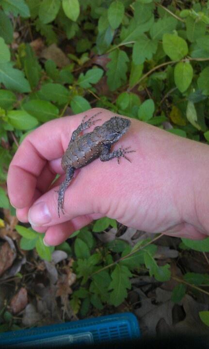 from colehaan.com · Lizard