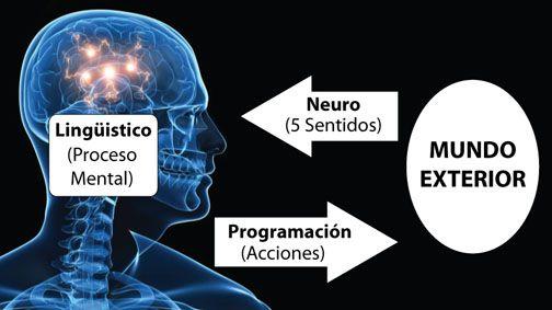Proceso de la programacion neurolinguistica