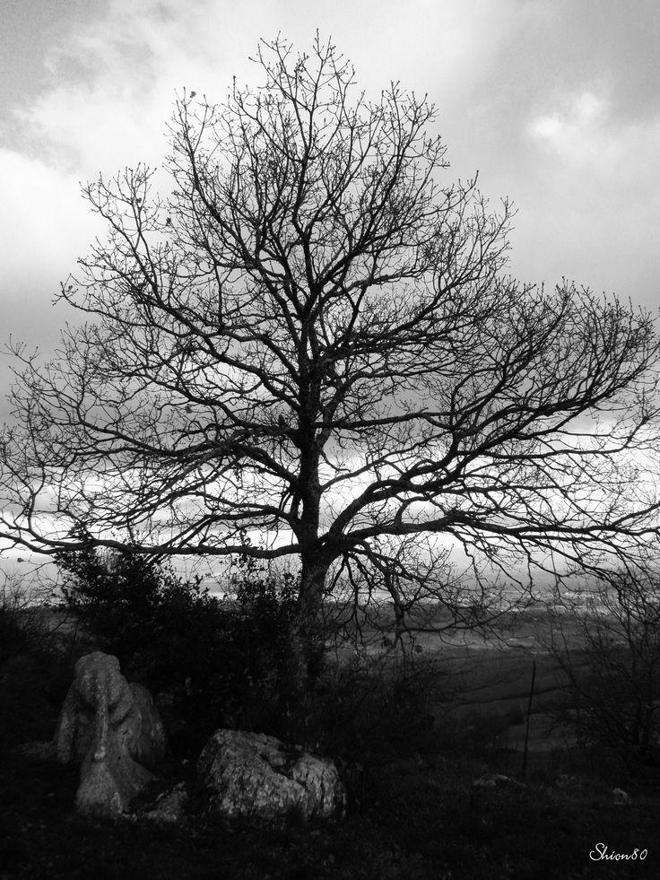 Winter Tree  #b&w #tree #nature #naturephotography #tuscany