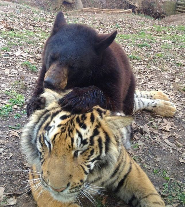 """This """"odd couple"""" pair can often be seen cuddling together"""