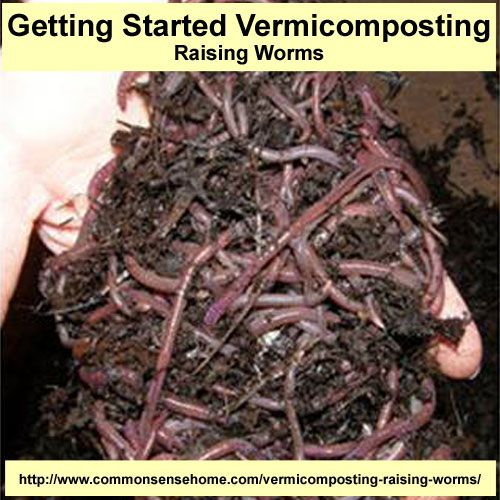 Getting Started Vermicomposting – Raising Worms