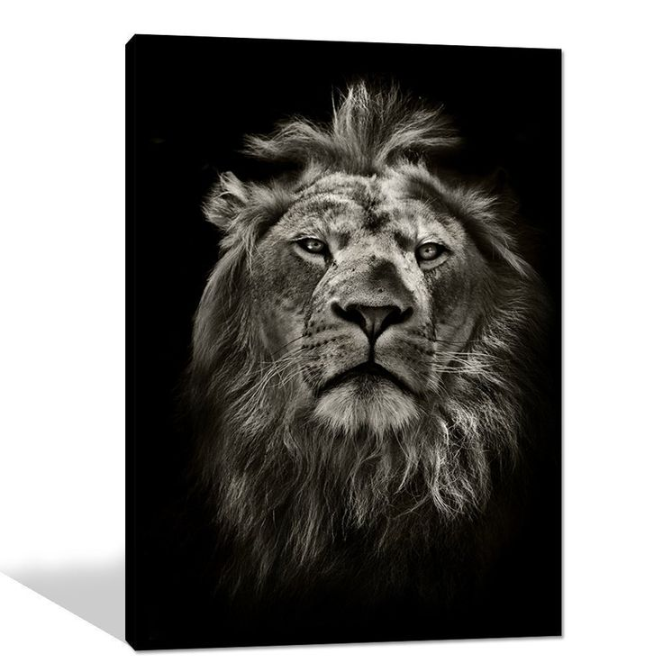 Global Artwork Printed Posters and Prints Black White Animal Lion Picture Wall Art on Canvas for Living Room Home Decor Stretched Ready to Hang (24 x 32 Inch)