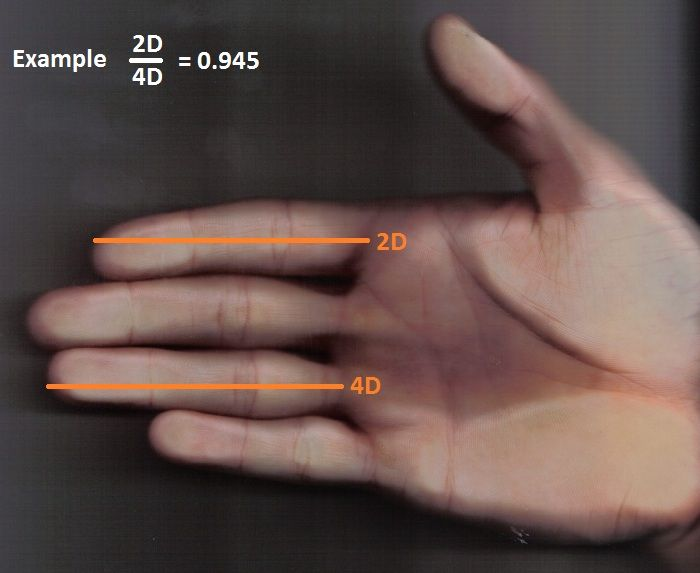 Hand zur Abmessung 2D4D - Digit ratio - Wikipedia