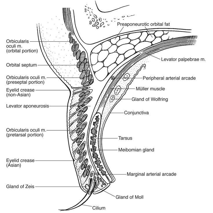 Mejores 10 imágenes de Medical Anatomy en Pinterest   Anatomía ...
