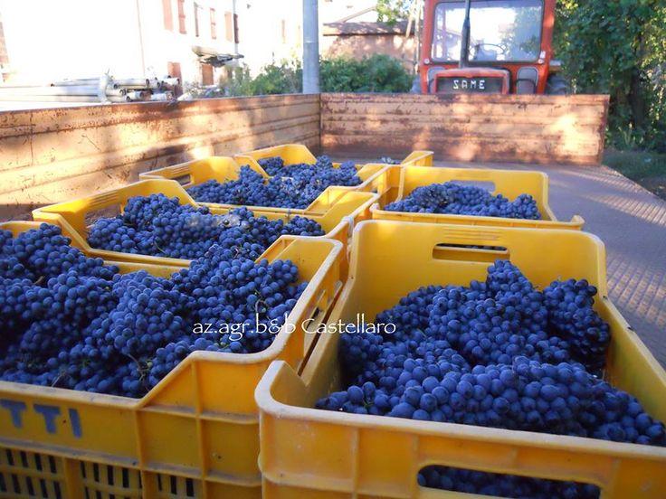 http://www.castellarocactus.altervista.org/joomla/