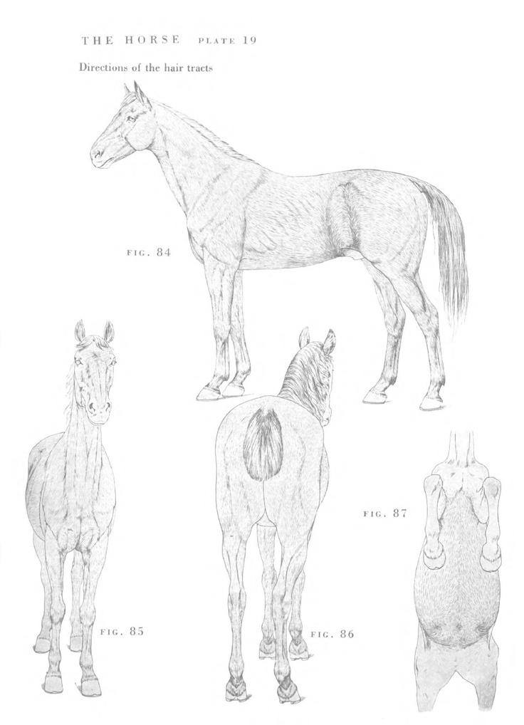 The 42 best horse images on Pinterest | Animal anatomy, Draw animals ...