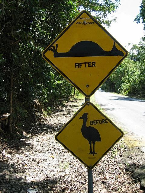 Cape Tribulation - Cassowarry Sign, via Flickr.