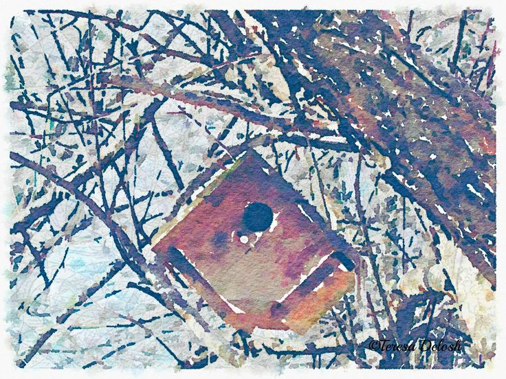#BirdHouse in #Tree with #Snow #Photograph