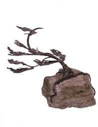 windswept pine - Google Search