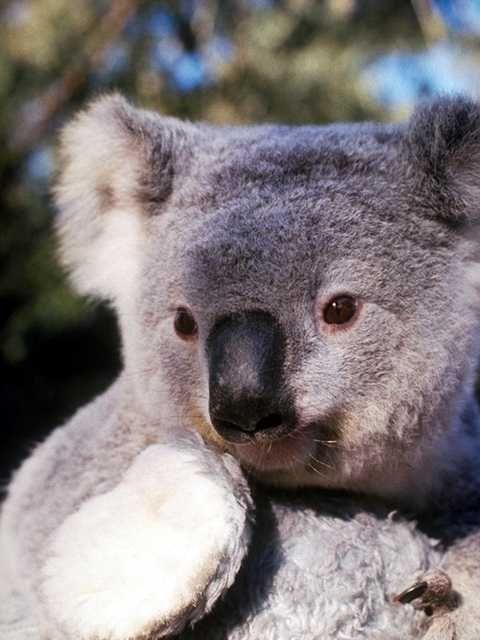 animal photo pins | Home :: Photos :: Zoo Animals (2)