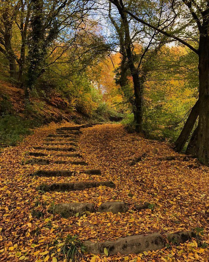 Tree covered steps near Dinham bridge in Ludlow Shropshire
