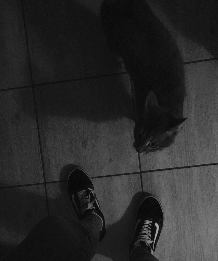 Vans-Cat