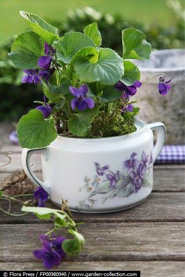 Violet  in a vintage Sugar Bowl