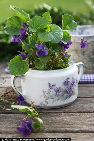 Africian violets are perfect for the small containers because they like to have their roots crowded. Although, the container needs drainage holes.