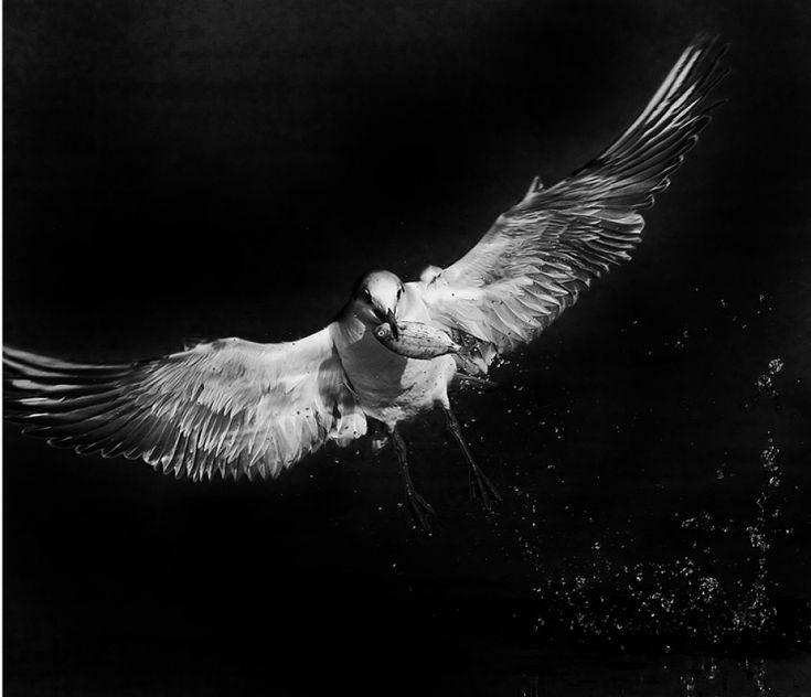 Vassilis Artikos Photography - bird