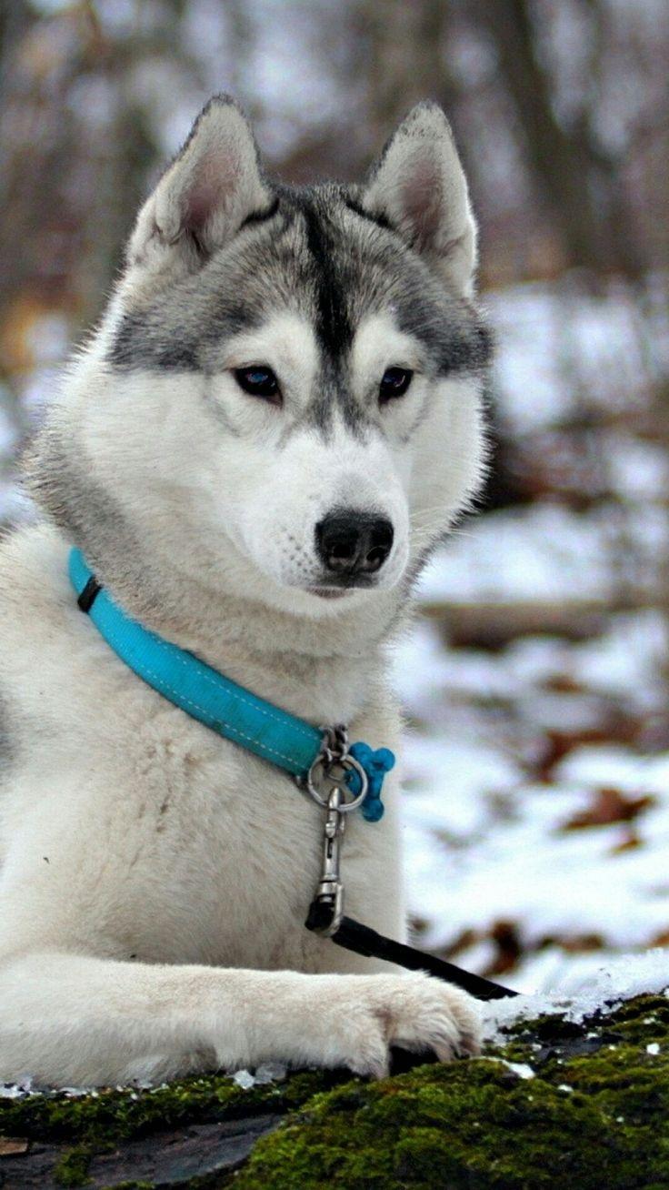 best Наши друзья images on pinterest amazing things doggies