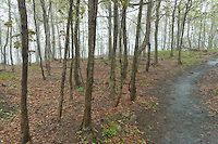 Hiking trails in the fog near the Dieppe summit of the Mont Saint-Hilaire in early spring. Mont Saint-Hilaire, Quebec, Canada.
