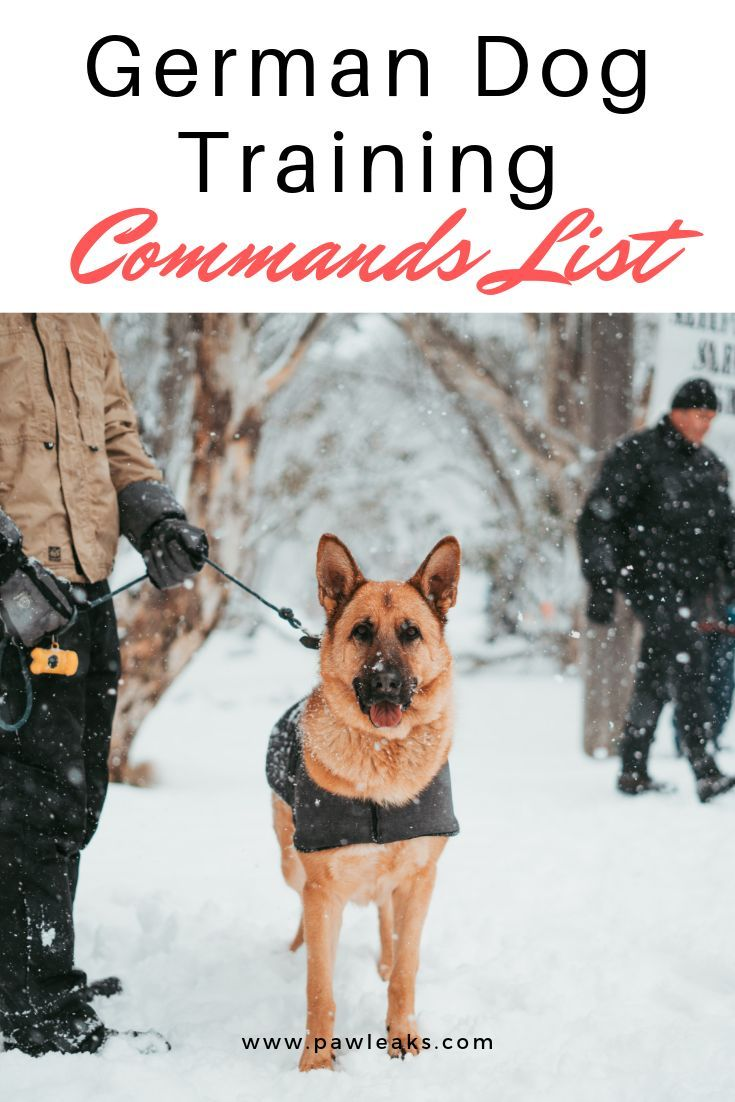 Ultimate German Dog Training Commands List German Dogs Dog