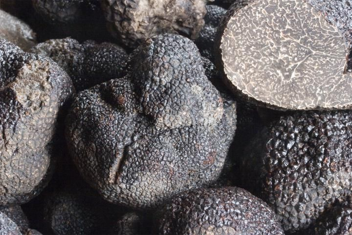 Fresh black winter truffle - Tuber melanosporum | FRESH TRUFFLES | Plantin - Le…