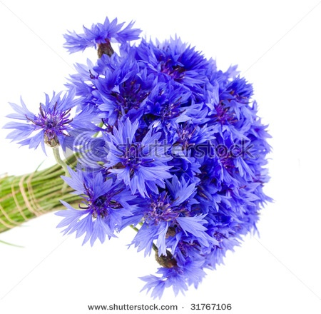 I like but these aren't like the cornflowers that grow in my garden... i remember writing an essay in grade 2 or 3 about why i loved cornflowers