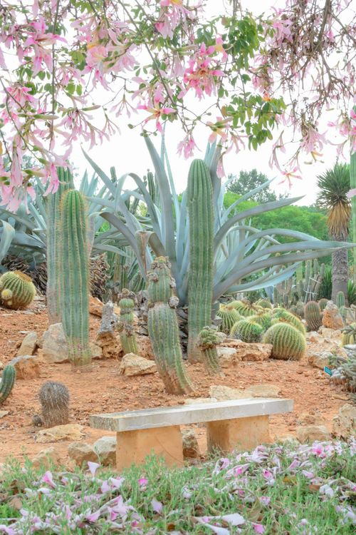 311 best succulent and cactus gardens images on Pinterest Desert