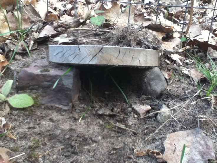 Simple little toad house