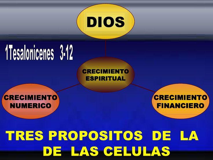 Tres Propositos  De  La   De  Las Celulas by Centro Cristiano Nueva Vida Int. Cristiano via slideshare