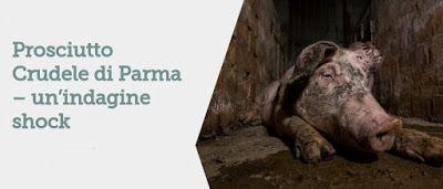 Bio Bloggando: Prosciutto Crudele di Parma – un'indagine shock