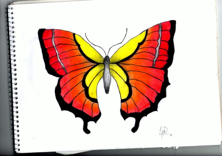 #butterfly #borboleta #drawing #colourful