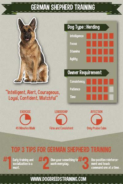 German Shepherd stat and information graphic.. great training tips since the puppy is part German Shepherd