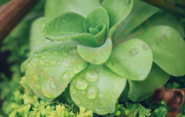 تفسير حلم رؤية نبات الزينة في المنام معنى نباتات الزينة في البيت زراعة نبات الزينة تفسير رؤية نب Succulents Organic Horticulture Container Gardening Flowers