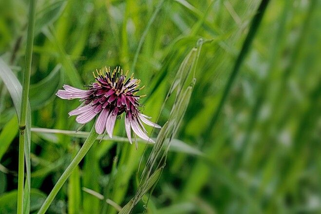 Wild flower Αγριο λουλούδι.