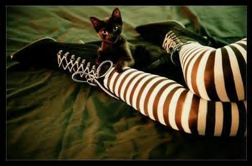 Black cats and striped stockings