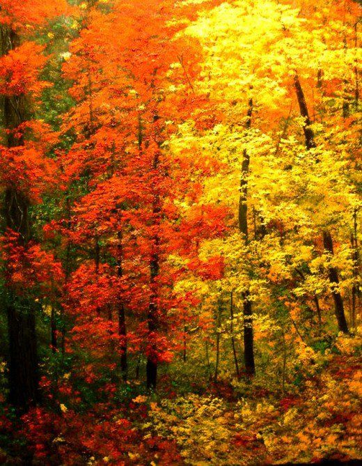 large, free cross stitch pattern of autumn forest
