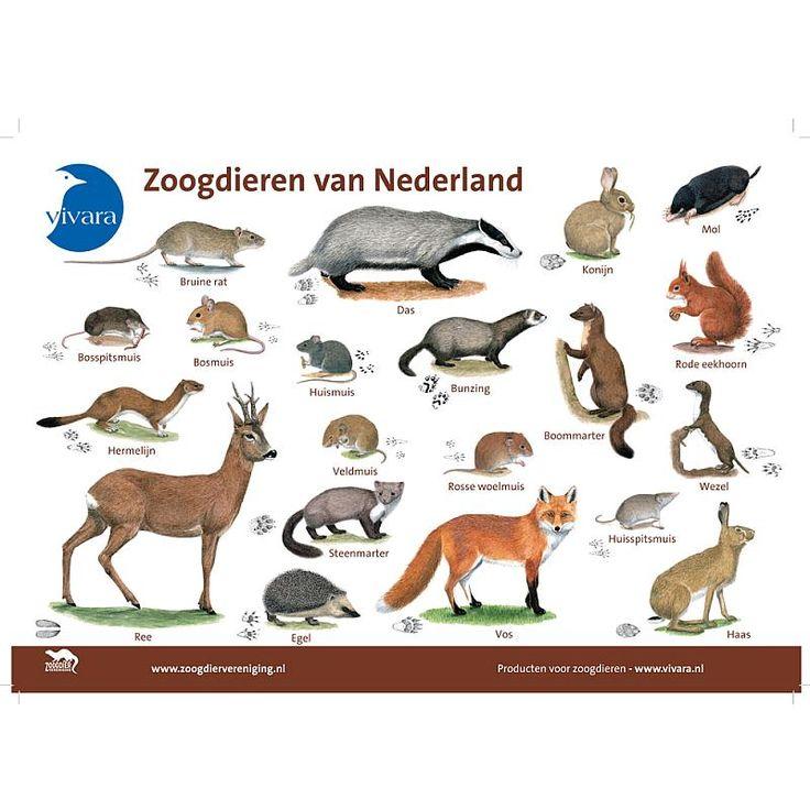 Zoogdieren van Nederland
