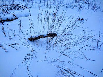 naturensdronning: Dagens utvalgte - 12. jan 2016