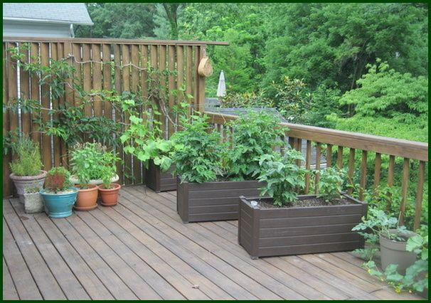 Vegetable Garden Have A Better, Deck Vegetable Garden