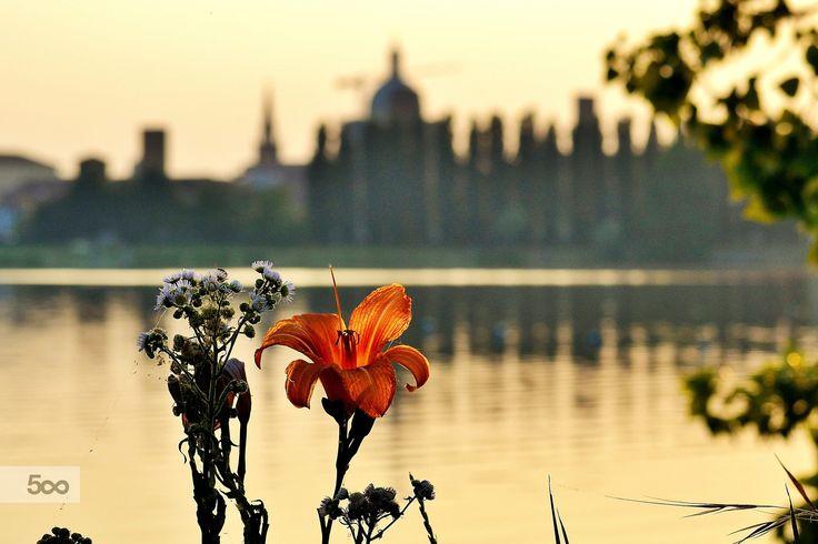 flowers in Mantova by Carlotta Ricci on 500px